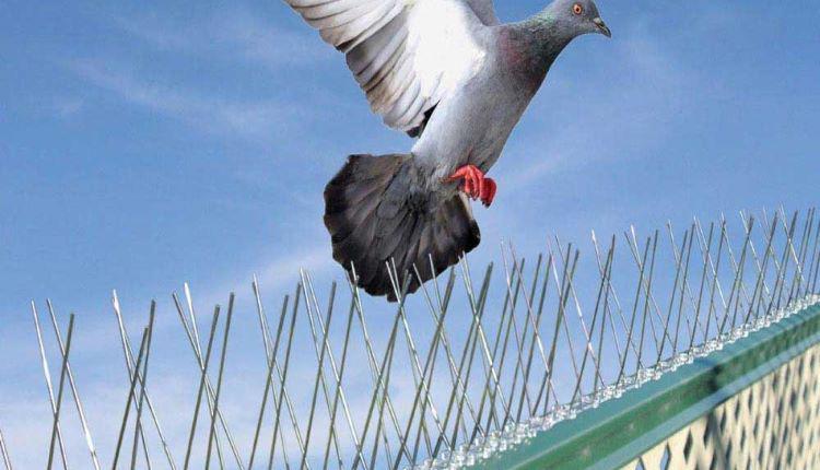 شركة مكافحة الطيور بالمدينة المنورة
